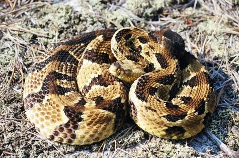 Snakes at Quabbin?