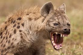 Moriarty's Monsters Part 3: Spotted Hyena