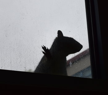Squirrels Imprisoned in School Courtyard Due to Lack of Trees